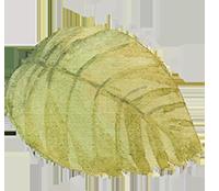 leaf-1_2-1