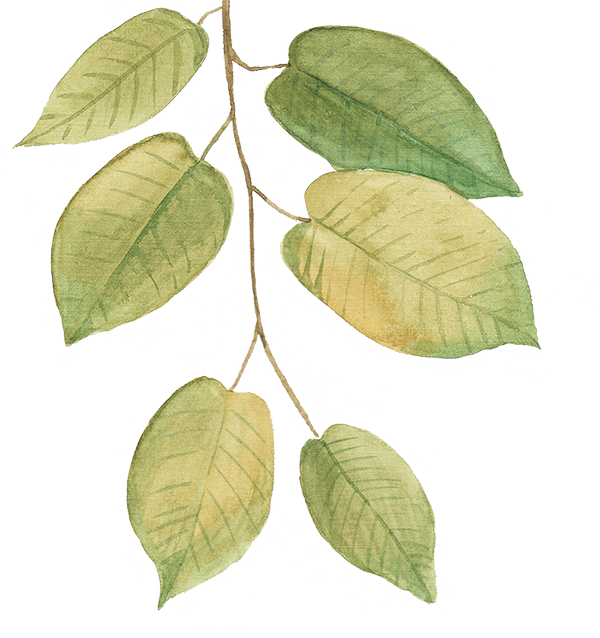leaf-bg